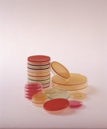 prepared media, contact plates, settle plates, environmental monitoring plates