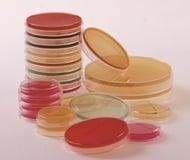 agar-petri-dishes