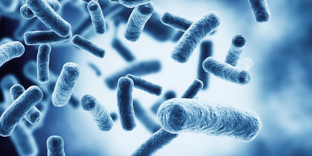How are bacterial isolates identified and named?
